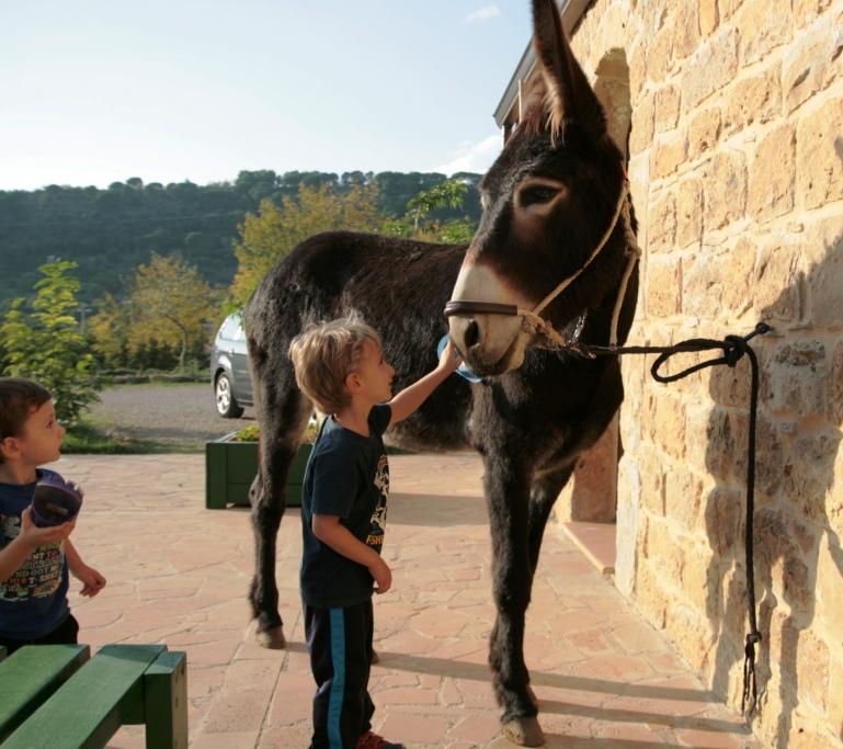 bambino che accarezza un asino in una fattoria didattica in sicilia